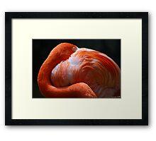 Flamingo's Best Framed Print