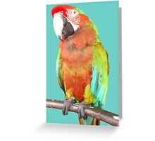 Vector Style Harlequin Macaw On A Perch Greeting Card