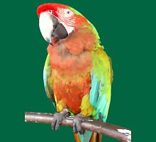Vector Style Harlequin Macaw On A Perch Womens T-Shirt