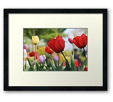 Tulips of keukenhof Holland Framed Print