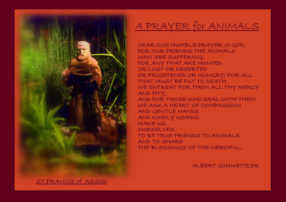 '' A PRAYER FOR ANIMALS ''  by Albert Schweitzer by artist4peace