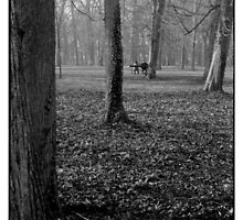 alone in the park • dijon, burgundy • 2008 by lemsgarage