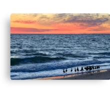 Willets and Sundown Surf Canvas Print