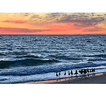 Willets and Sundown Surf Photographic Print