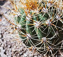 Cactus Closeup by PatiDesigns
