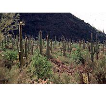 Desert near Tucson Photographic Print