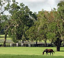 Horse country by Larry  Grayam