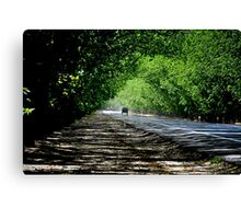 Green Tunnel Through The Pecan Orchard Canvas Print