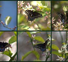 Butterfly Calendar  2010 by Virginia N. Fred