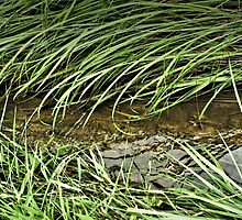 """""""A Streamlet Runs Through It""""... prints and products by © Bob Hall"""
