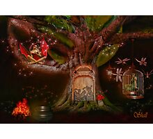 The Tree House Photographic Print