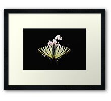 Scarce Swallowtail On Wild Garlic Flowers Vector Isolated Framed Print
