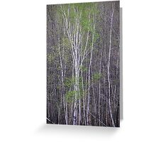 Young Birch Greeting Card