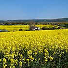 Surrounded By Rapeseed Flowers by Susie Peek