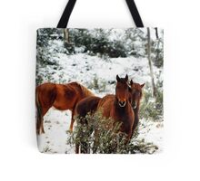 Brumby Stare Tote Bag