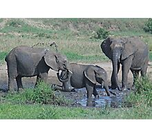 Elephant Mud Bath, Tarangire National Park, Tanzania, Africa (Y) Photographic Print