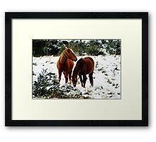 Snow Brumbies Framed Print