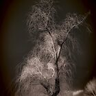 Winter Tree no. 99 by smoothstones