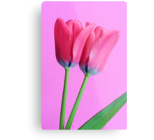 A study in pink Metal Print