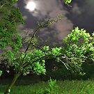 Petrified Night by White Owl