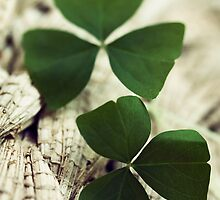 shamrocks by jsbb123