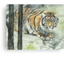 Crouching Tiger Canvas Print
