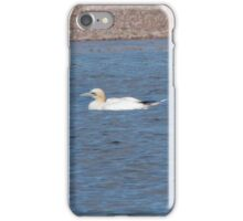 Northern Gannet iPhone Case/Skin