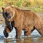 Alaska Brown Bear by Dyle Warren