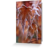 Frosted Maple Leaf Greeting Card