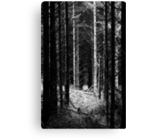 Where the Woods Lead Canvas Print