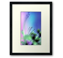 Cats Whiskers. Framed Print