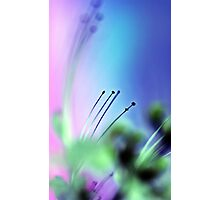 Cats Whiskers. Photographic Print