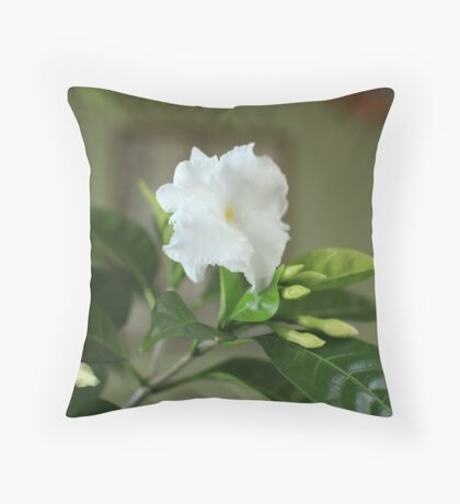 Potted flowers indoor Throw Pillow