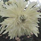 Dahlia Dream by Lozzar Flowers & Art