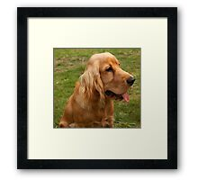 Young English Cocker Spaniel