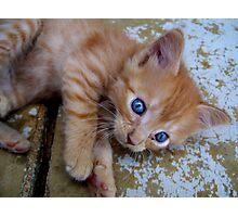 a kitten named watson Photographic Print