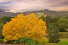 Autumn Is Here by mspfoto