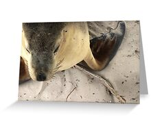 Portrait of a Seal Greeting Card