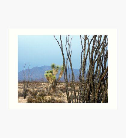 Rain in the Arizonia Desert Art Print