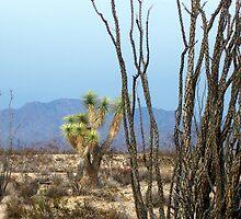 Rain in the Arizonia Desert by CynLynn