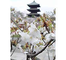 Sakura - Kyoto, Japan Photographic Print
