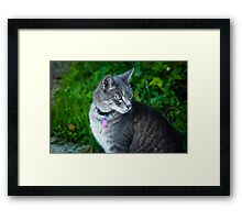 Bethesda cat Framed Print