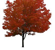 Maple Tree by Vintagestuff