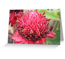 A burst of Colour Greeting Card