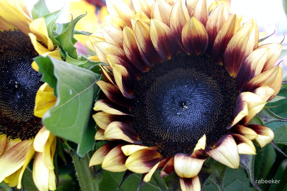 Market - Pale Sunflower by rabeeker