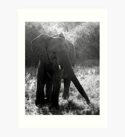 Safari - Elephant Arrival Art Print