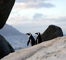 Safari - Penguin Love by rabeeker