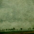 A Line of Trees by rosedew