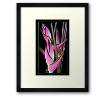 """Heliconia orthotricha 'Eden Pink"""" Framed Print"""