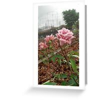 Ghetto Rose Greeting Card